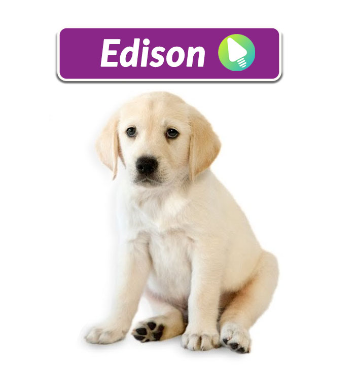 Meet Edison – Our Sponsored Guide Dog.